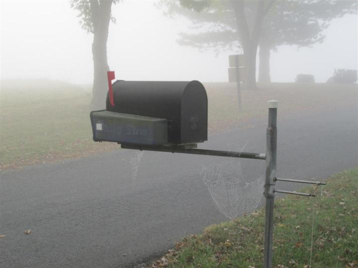 spider-webs-in-the-fog-004-(large)